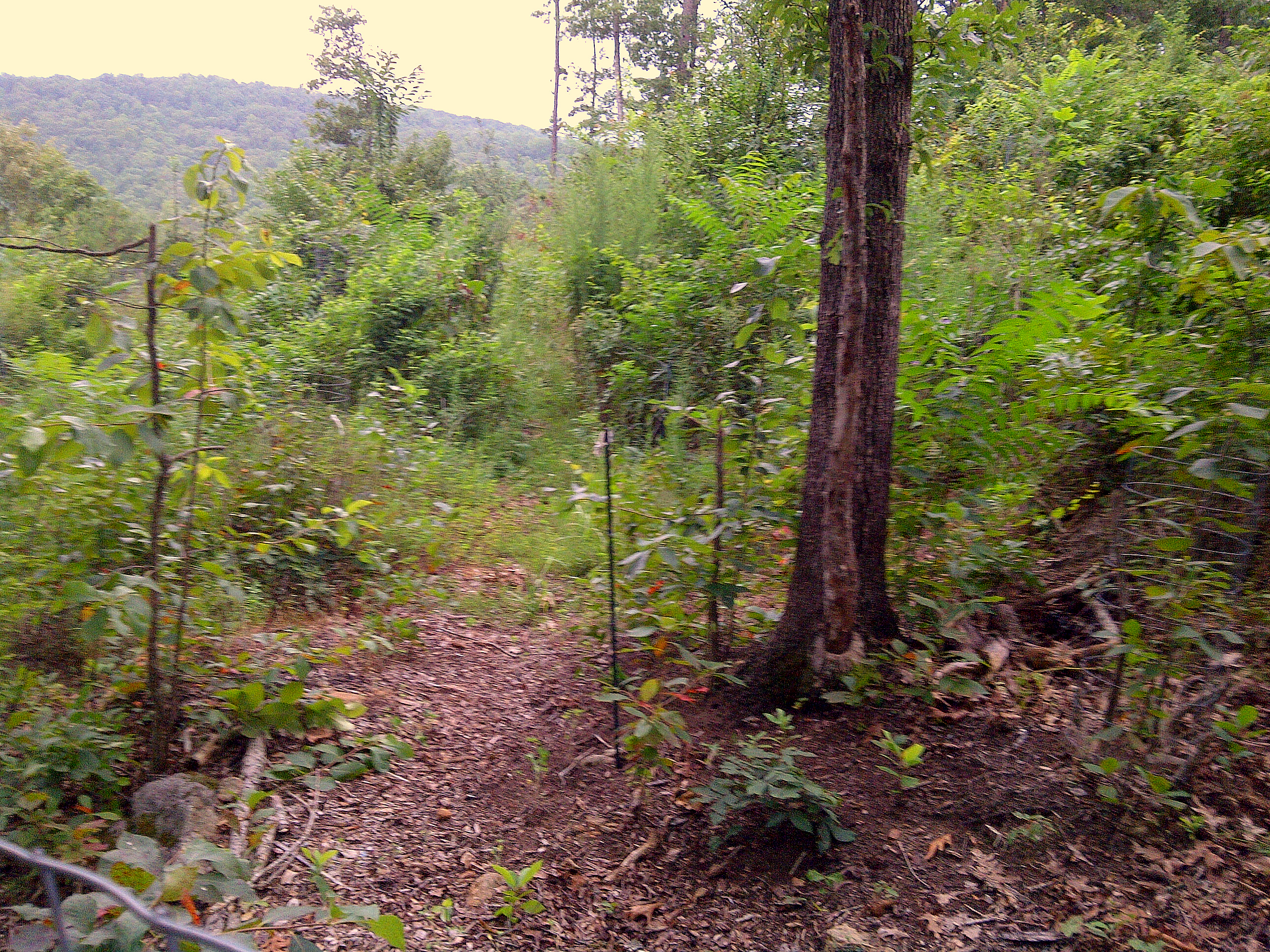 forest garden in permaculture